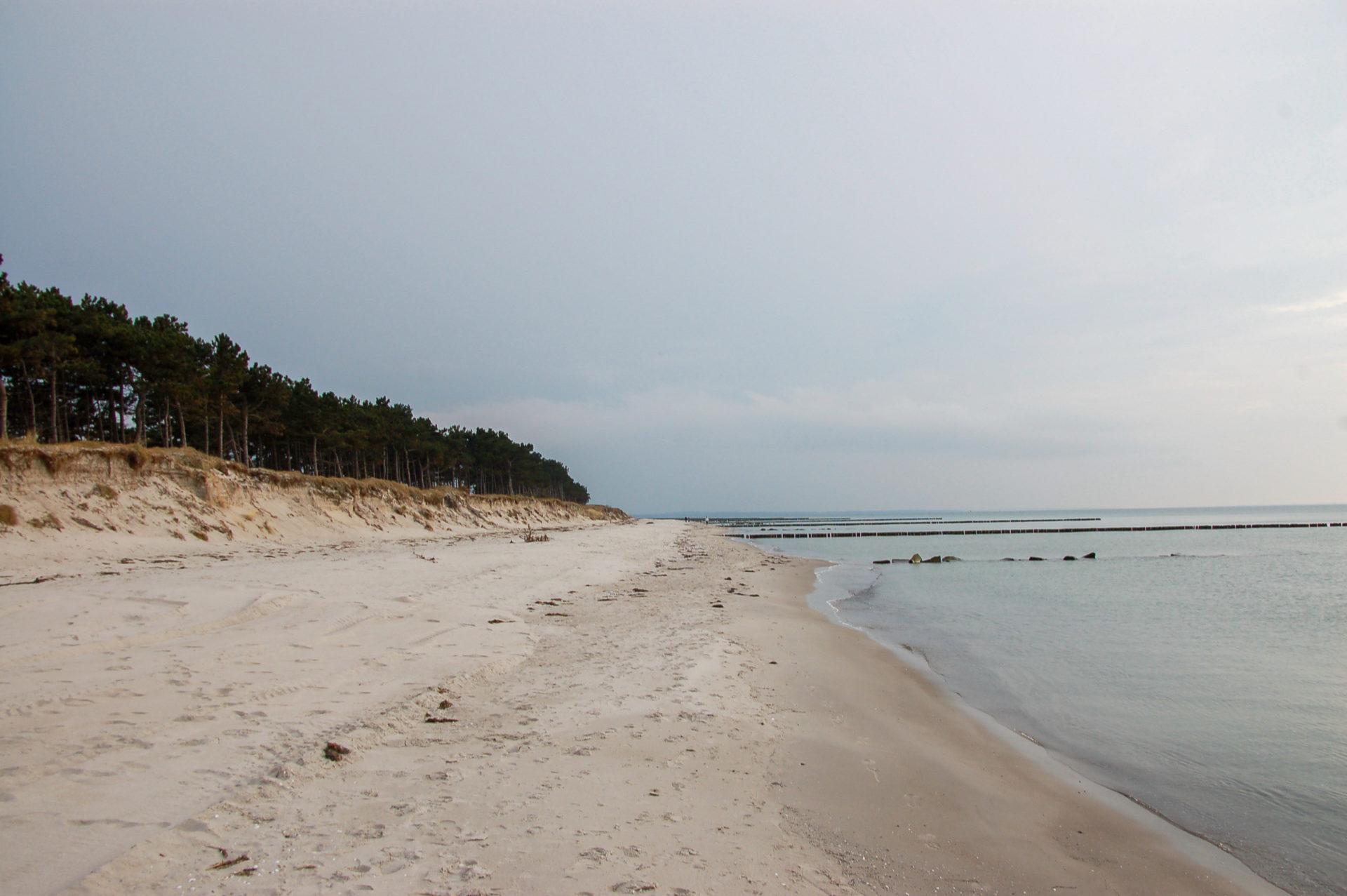 Strand mit Wald an der Wüstküste von Hiddensee.