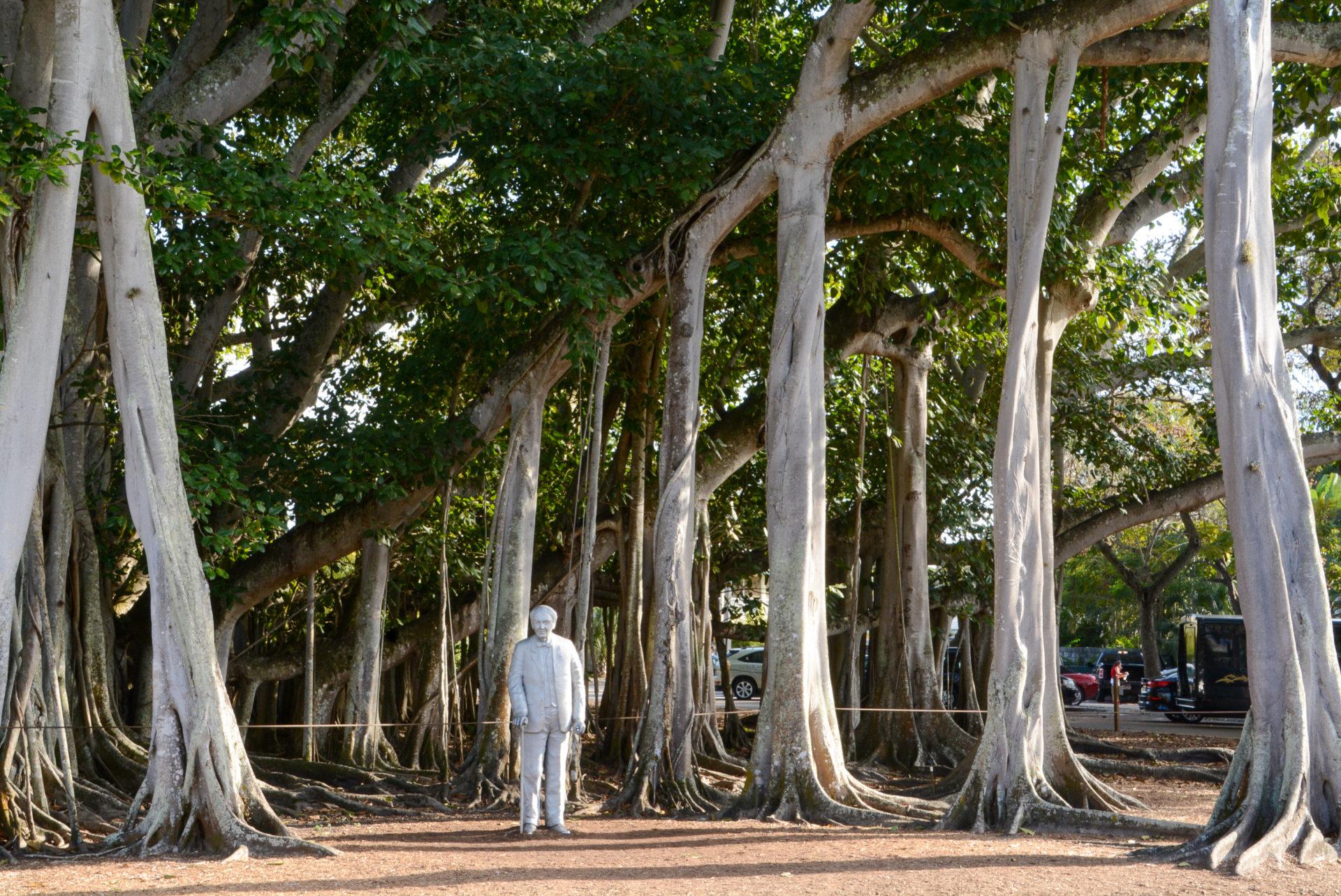 Denkmal für Thomas Edison im Estate in Fort Myers in Florida mit Banyan-Feigen