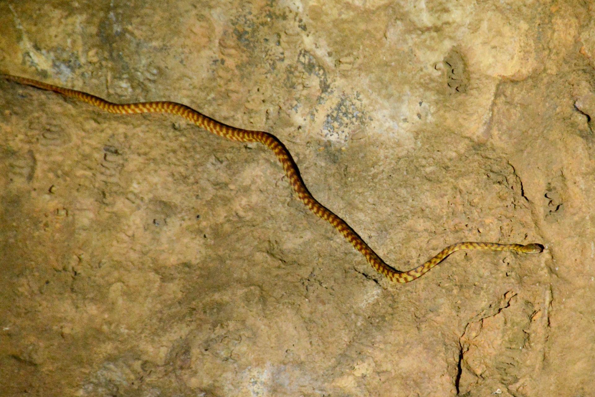 Baumschlange in einer Höhle in Queensland