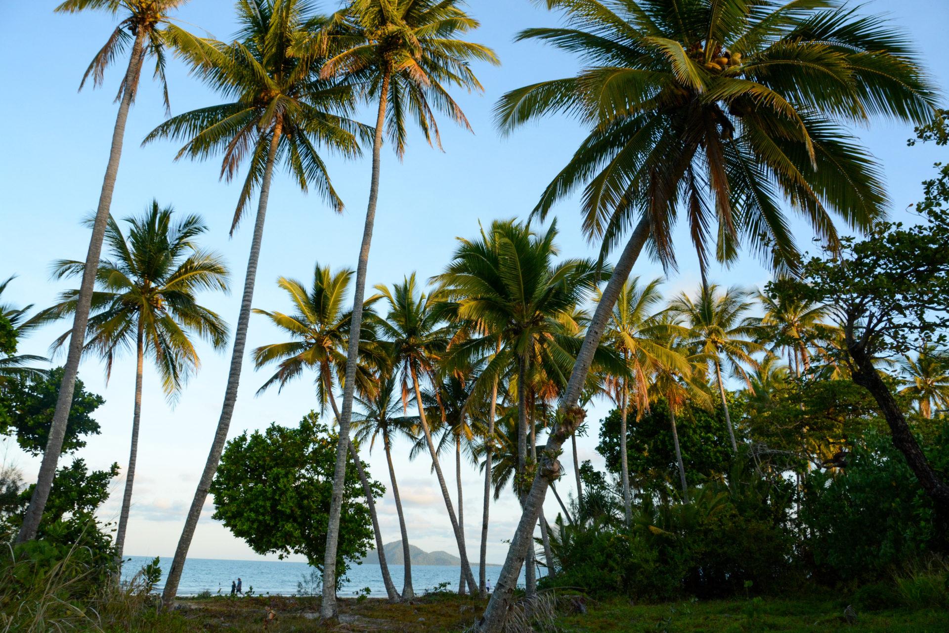 Palmen am Strand von Mission Beach in Queensland