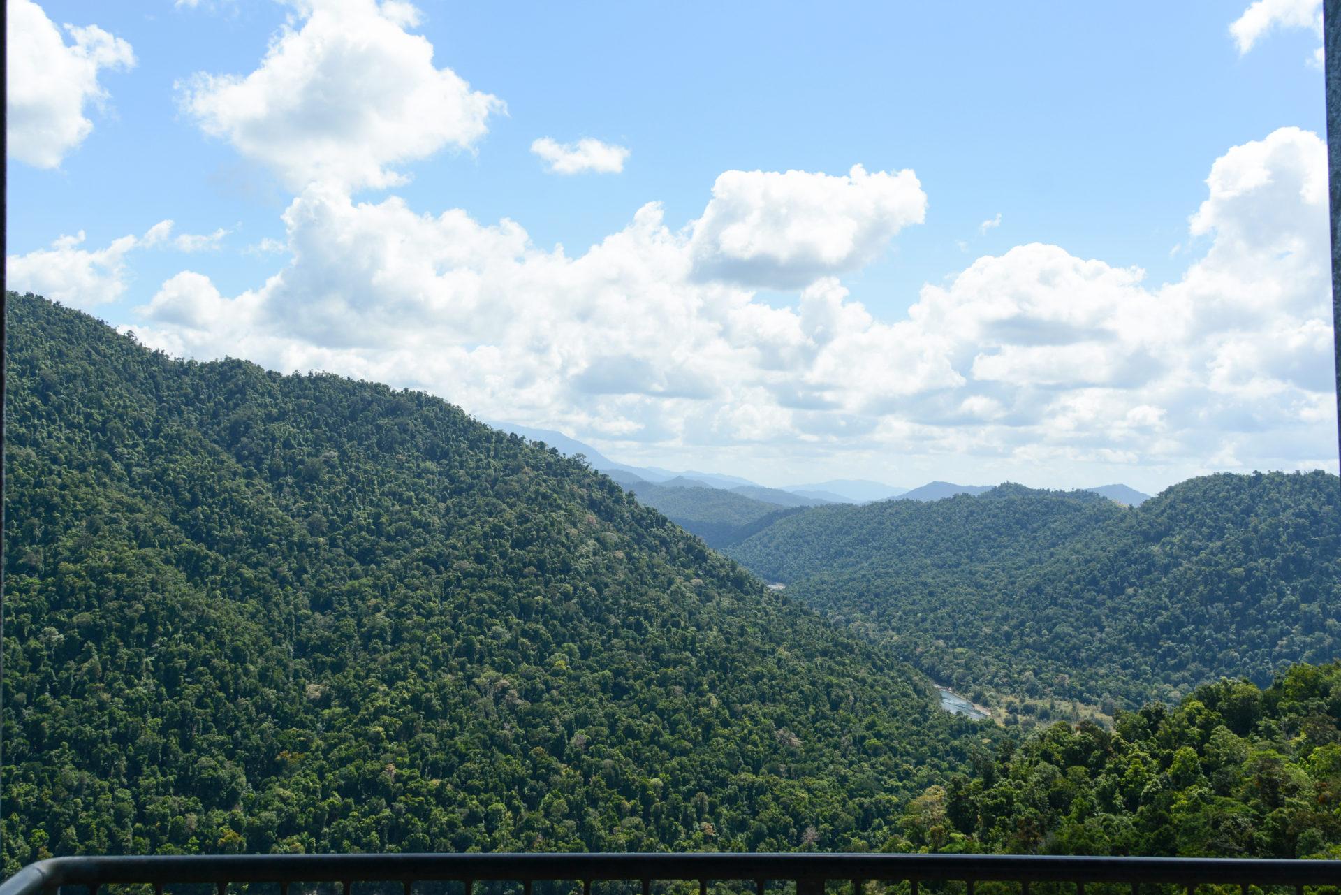 Der Regenwald von Queensland vom Momu Tropical Skywalk aus gesehen