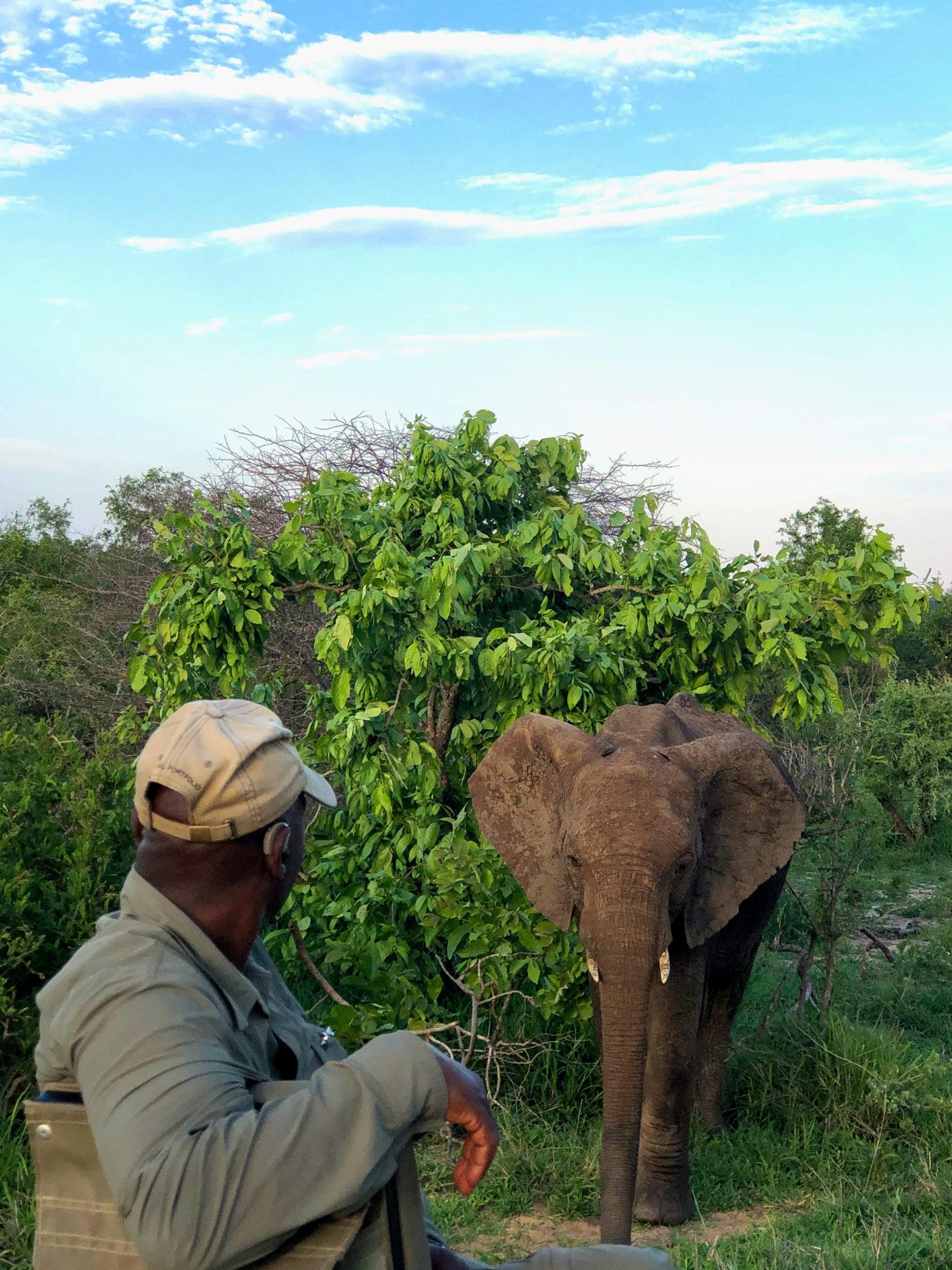 Master Tracker Jonas mit einem Elefanten