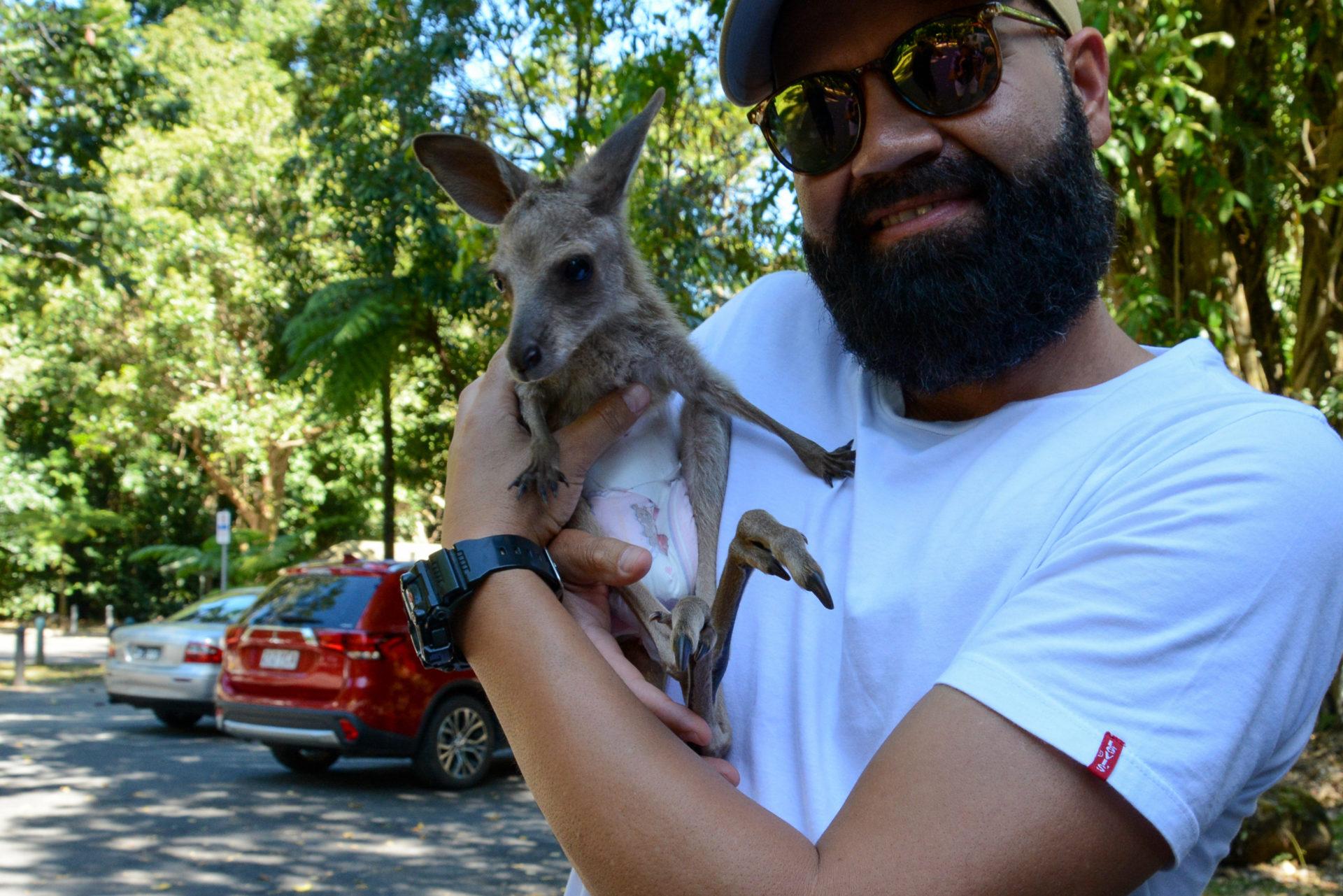 Ein ehemals verletztes Wallaby auf dem Arm von Ziehvater John in Queensland